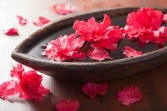 Schöne rote Azalee blüht in der hölzernen Schüssel für Badekurort Stockfotografie