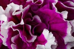 Schöne rote Blume Lizenzfreies Stockbild