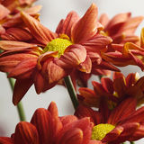 Schöne rote Blume Stockfoto