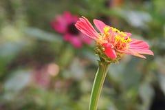 Schöne rote Blume 2 stockfoto