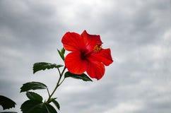 Schöne rote Blume lizenzfreie stockbilder