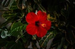 Schöne rote Blume stockbilder