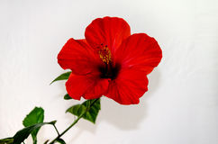 Schöne rote Blume stockbild