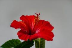 Schöne rote Blume stockfotografie