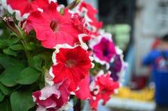 Schöne rote Blumen Stockfotografie