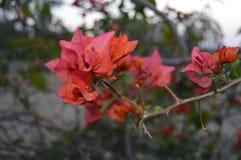 Schöne rote Blumenblätter stockfoto