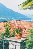 Schöne rote eingemachte Blume, Ziegeldach und andere Details in ländlichem alpinem Tessin-Bezirk in der Süd-Schweiz mit Lizenzfreie Stockbilder