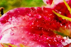 Schöne rote Lily Flower stock abbildung