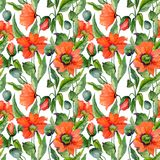 Schöne rote Mohnblume blüht mit grünen Blättern auf weißem Hintergrund Blumenmuster des nahtlosen Sommers Adobe Photoshop für Kor Stockfotos