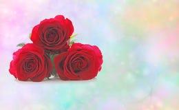 Schöne rote Rosen Lizenzfreies Stockbild