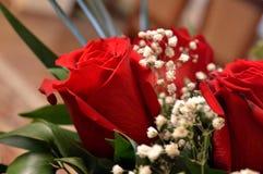 Schöne rote Rosen Eine Kombination der Schönheit und der subtilen Natürlichkeit lizenzfreie stockfotos