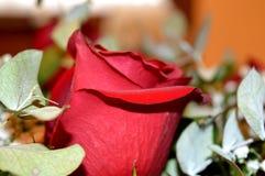Schöne rote Rosen Eine Kombination der Schönheit und der subtilen Natürlichkeit stockbild