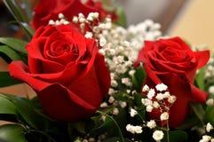 Schöne rote Rosen Eine Kombination der Schönheit und der subtilen Natürlichkeit lizenzfreie stockbilder