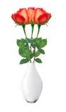 Schöne rote Rosen im weißen Vase lokalisiert auf Weiß Lizenzfreies Stockfoto