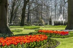 Schöne rote Tulpen mit Bäumen des grünen Grases und des Hintergrundes stockfotos