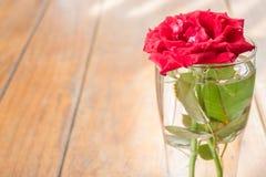 Schöne Rotrose auf Holztisch Stockbilder
