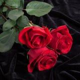 Schöne Rotrose auf schwarzem Satin Stockfotos