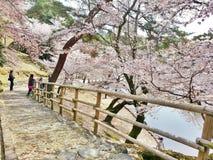 Schöne Sakura Walk-Weise zu Sagi-iketeich Stockfotos