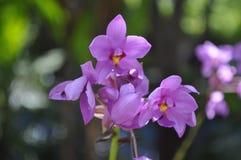 Schöne Schönheit der frischen Blume der Blume der Natur Lizenzfreies Stockfoto