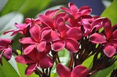 Schöne Schönheit der frischen Blumen der Blume des Naturgrünblattes Stockfotos