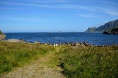 Schöne Schafe, die nahe blauem Sommerozean weiden lassen Stockbild