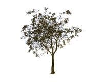 Schöne Schattenbildform des grünen Baums lokalisiert auf weißem Hintergrund Lizenzfreie Stockfotografie