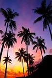Schöne Schattenbildkokosnuss-Palmen auf dem tropischen Strand bei Sonnenaufgang setzen am frühen Morgen Zeit fest Stockbild