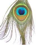 Schöne, schimmernde Farben der Pfau-Feder lizenzfreies stockfoto