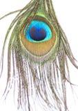 Schöne, schimmernde Farben der Pfau-Feder stockbild
