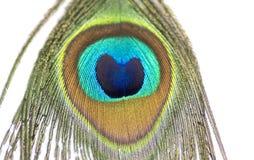 Schöne, schimmernde Farben der Pfau-Feder stockfotos