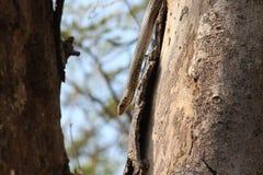 Schöne Schlange im Holz Stockfotografie