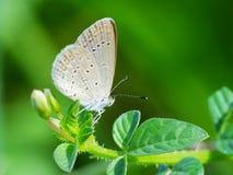 Schöne Schmetterling decends auf der Blume Stockfoto