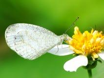 Schöne Schmetterling decends auf der Blume Stockbild
