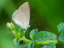 Schöne Schmetterling decends auf der Blume u. dem Blatt Stockbild