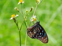 Schöne Schmetterling decends auf der Blume u. dem Blatt Lizenzfreie Stockfotografie