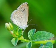 Schöne Schmetterling decends auf der Blume u. dem Blatt Lizenzfreies Stockfoto