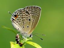 Schöne Schmetterling decends auf der Blume u. dem Blatt Stockfoto