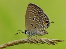 Schöne Schmetterling decends auf der Blume u. dem Blatt Lizenzfreies Stockbild