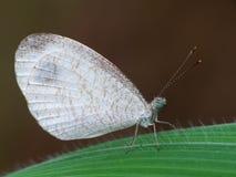 Schöne Schmetterling decends auf der Blume u. dem Blatt Lizenzfreie Stockfotos