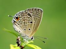 Schöne Schmetterling decends auf der Blume u. dem Blatt Stockfotografie
