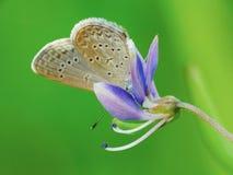 Schöne Schmetterling decends auf der Blume u. dem Blatt Lizenzfreie Stockbilder