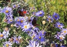 Schöne Schmetterlinge, die auf Blumenknospen in einer bunten Wiese im Sommer sitzen und einziehen lizenzfreie stockfotos