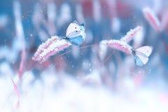 Schöne Schmetterlinge im Schnee auf dem wilden Gras auf einem blauen und rosa Hintergrund Künstlerisches Winter-Weihnachtennatürl lizenzfreie stockfotos