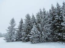 Schöne schneebedeckte Bäume im Winter, Litauen Stockbilder