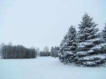 Schöne schneebedeckte Bäume im Winter, Litauen Lizenzfreie Stockbilder