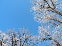 Schöne schneebedeckte Bäume im Winter, Litauen Lizenzfreie Stockfotografie