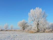 Schöne schneebedeckte Bäume im Winter, Litauen Stockfoto