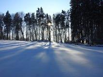 Schöne schneebedeckte Bäume im Winter, Litauen Lizenzfreie Stockfotos