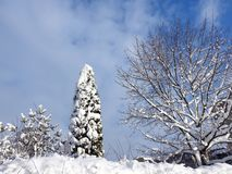 Schöne schneebedeckte Baumniederlassungen, Litauen Lizenzfreie Stockbilder