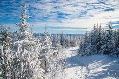 Schöne schneebedeckte Landschaft in Quebec, Kanada lizenzfreie stockfotografie